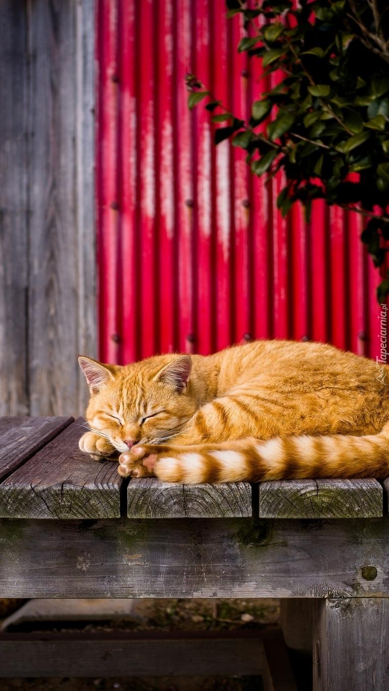 Śpiący rudy kot
