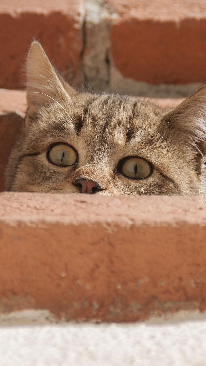 Spojrzenia kota zza cegieł