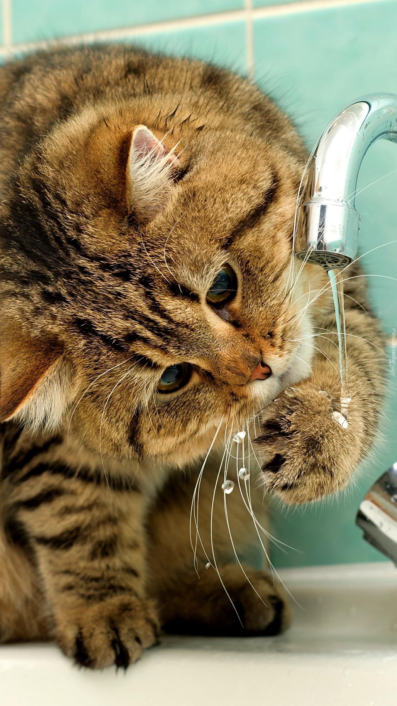 Spragniony kotek