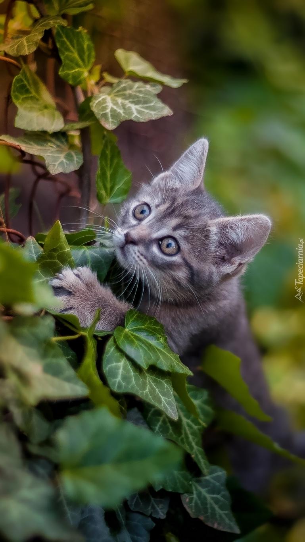 Sprytny mały kotek