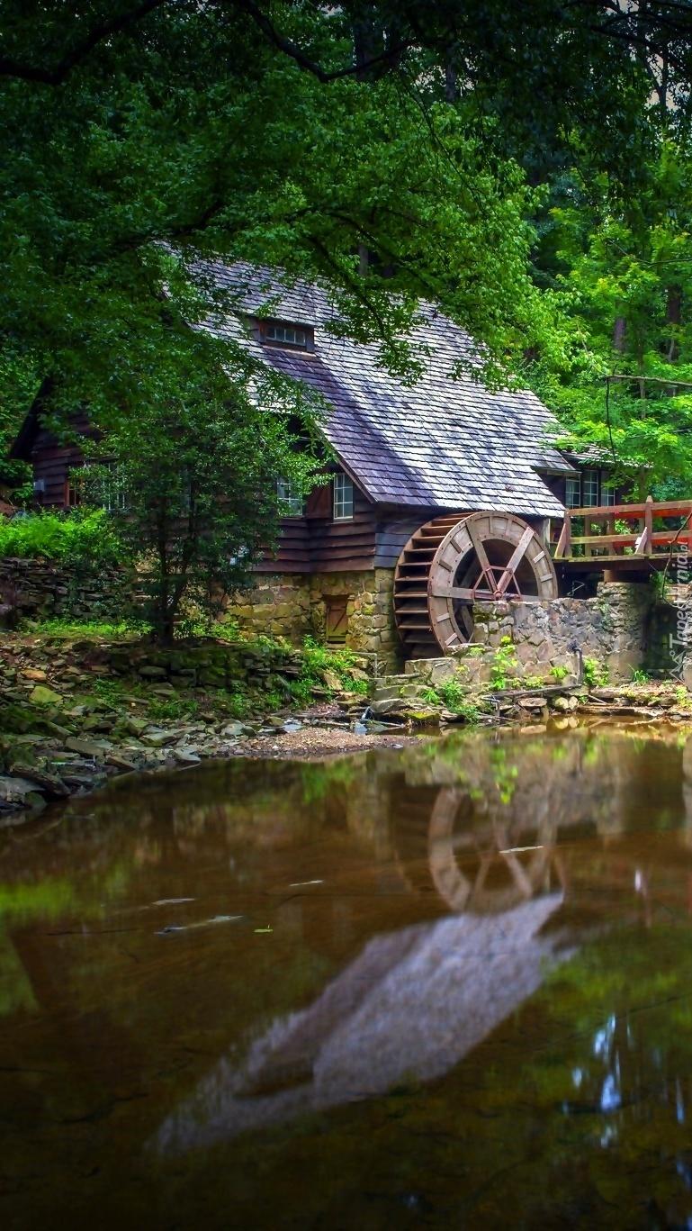 Stary młyn w lesie nad rzeką