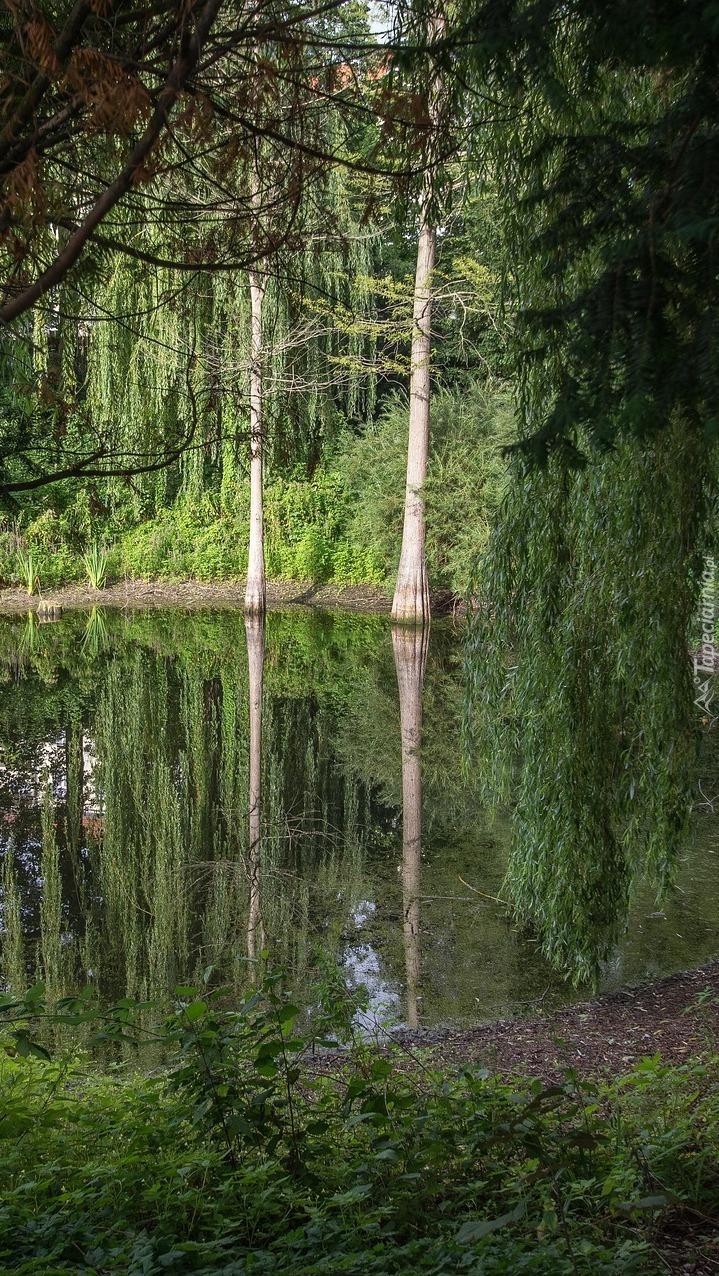 Staw w zielonym lesie