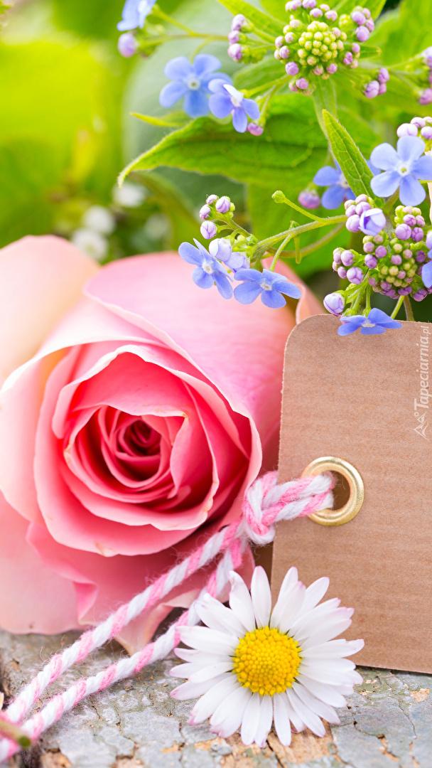 Stokrotka obok róży