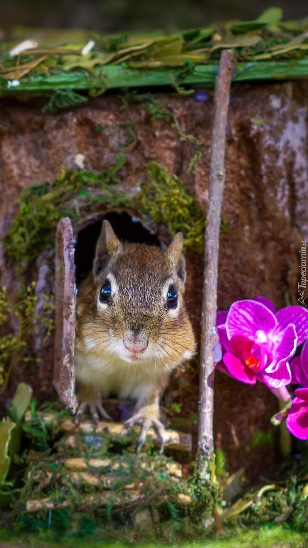 Storczyki obok wiewiórki w dziupli