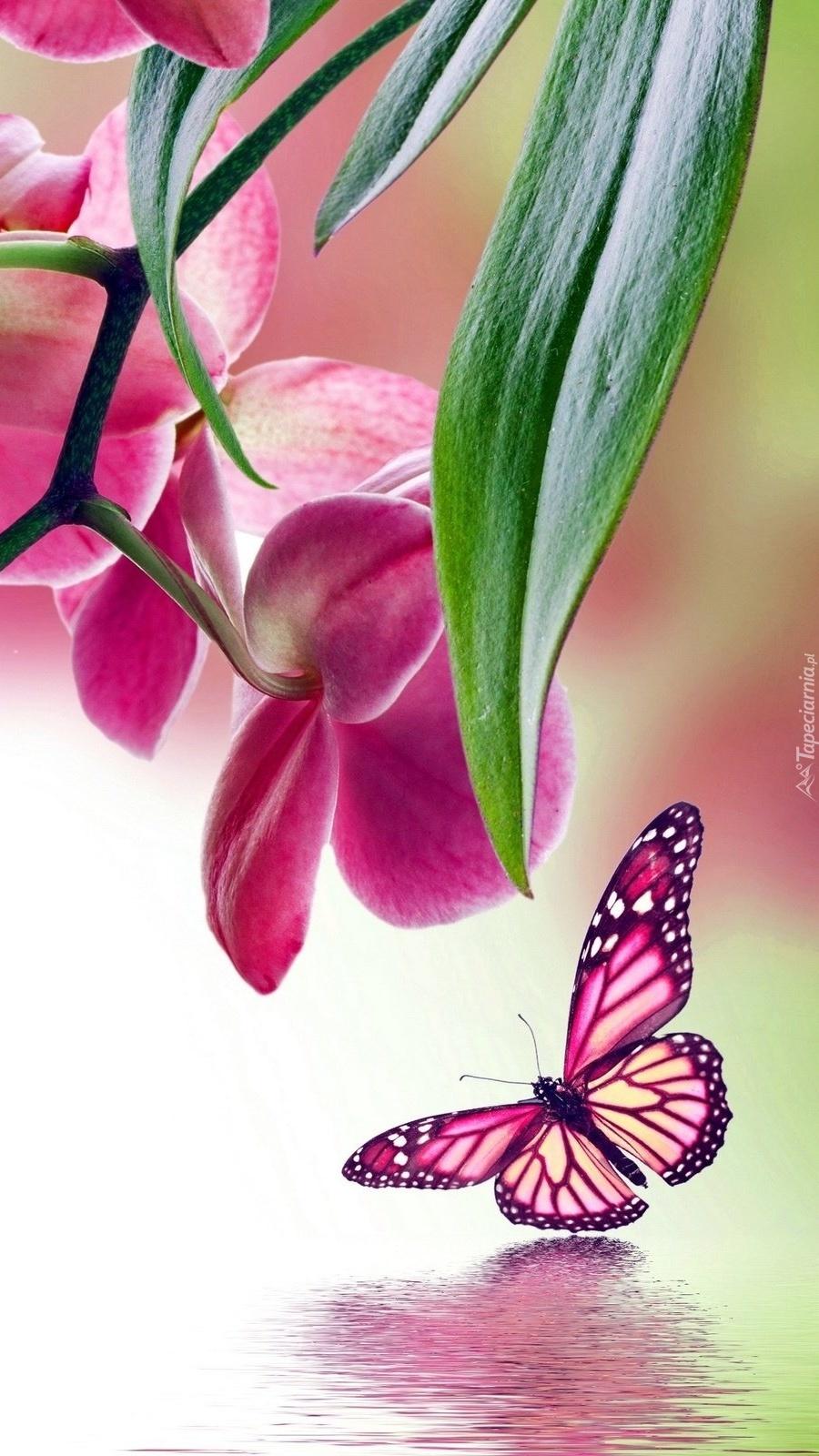 Storczykowy motyl