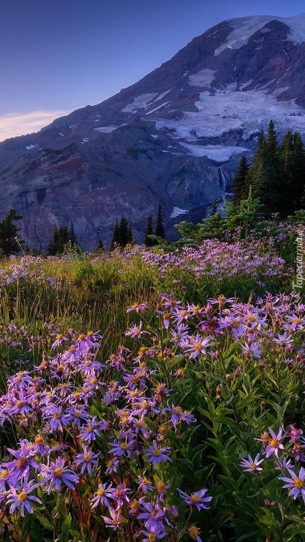 Stratowulkan Mount Rainier