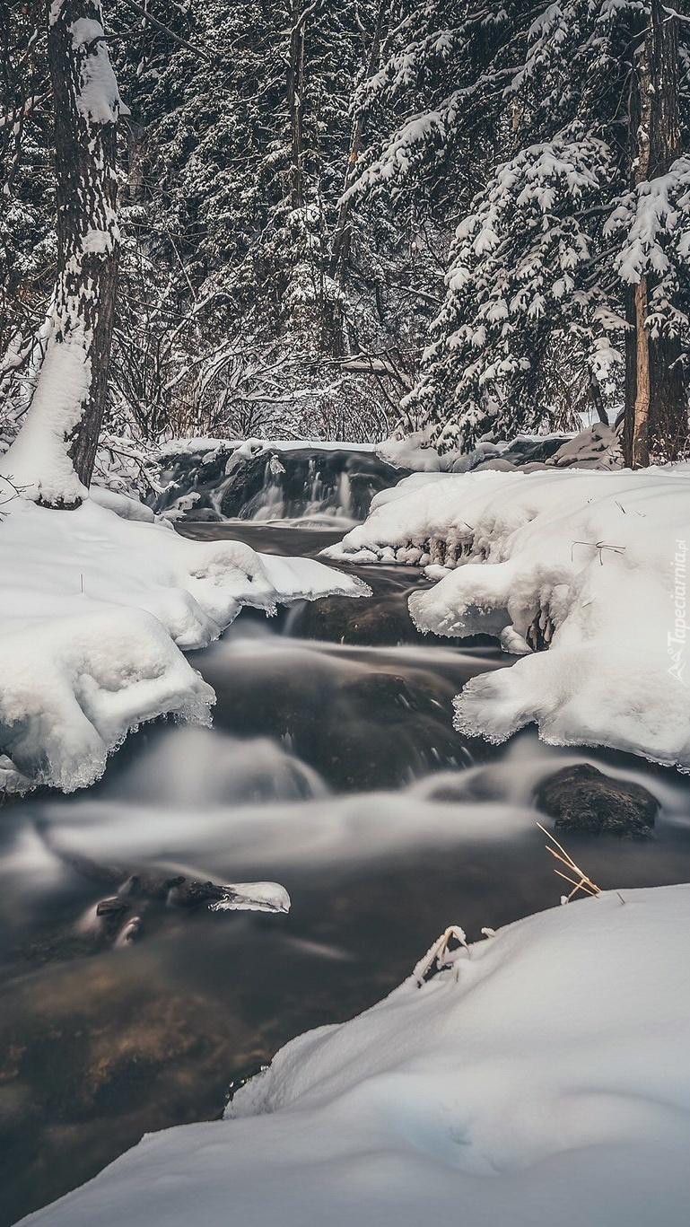 Strumyk i las w zimowej scenerii