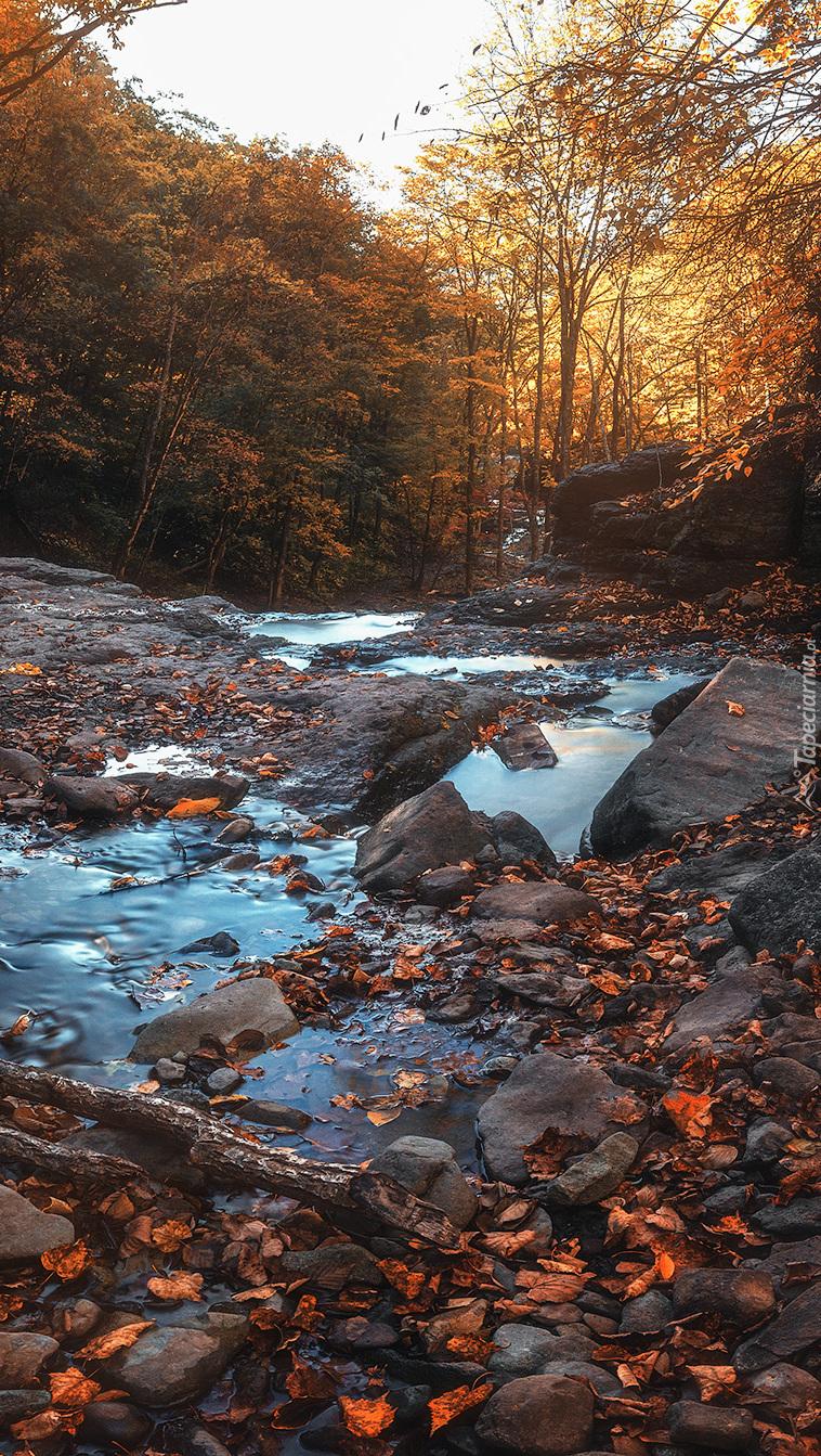Strumyk między kamieniami w jesiennym lesie