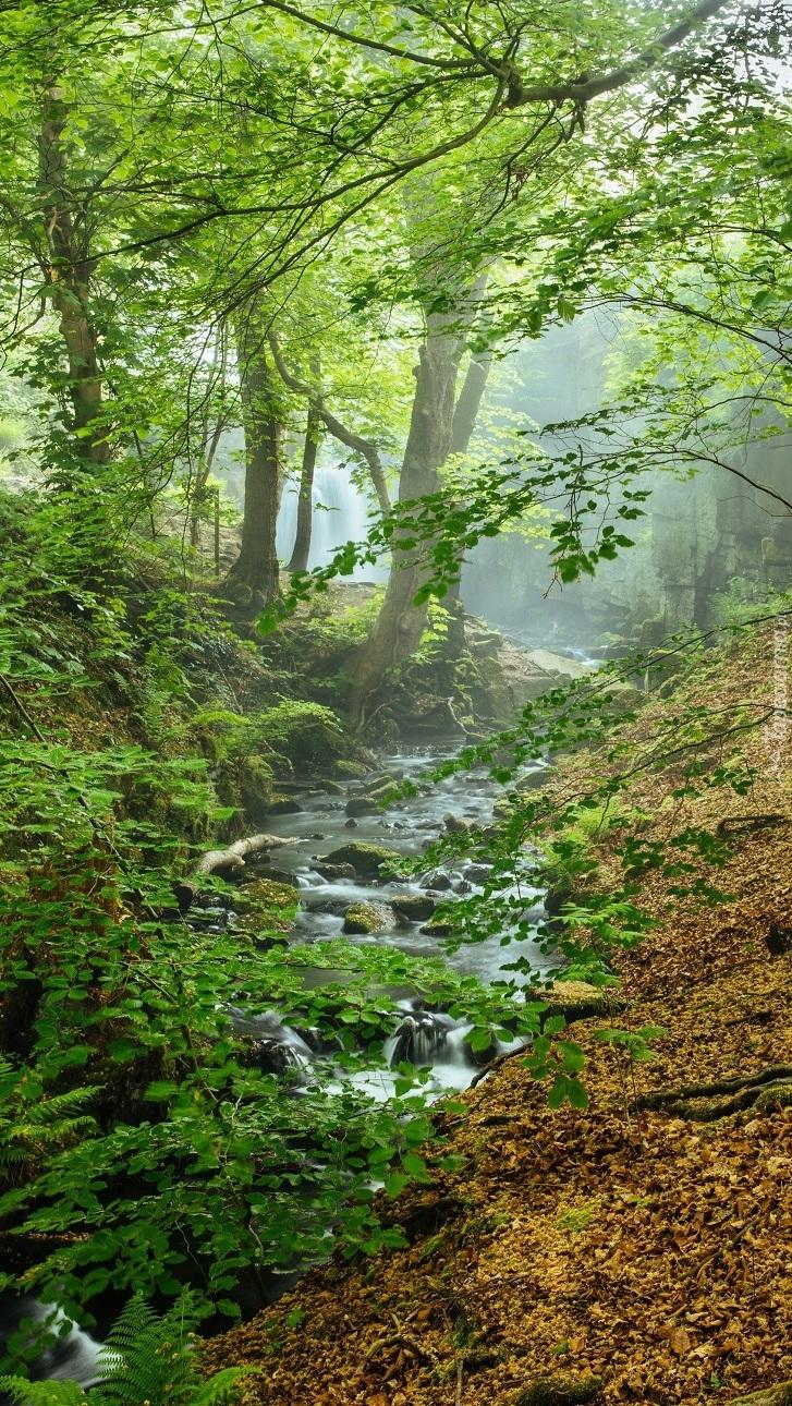 Strumyk płynący w lesie