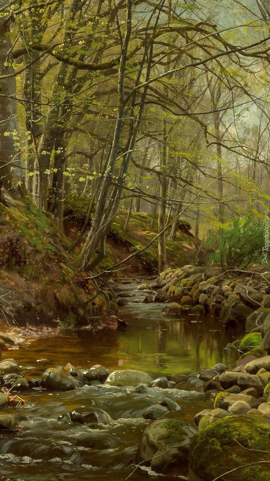 Strumyk w lesie