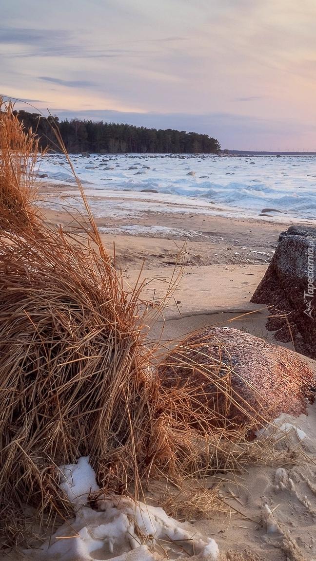 Sucha trawa i kamienie na plaży