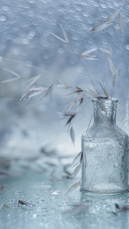 Sucha trawa w butelce