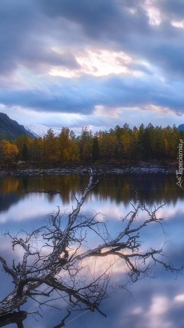 Suche gałęzie nad wodą