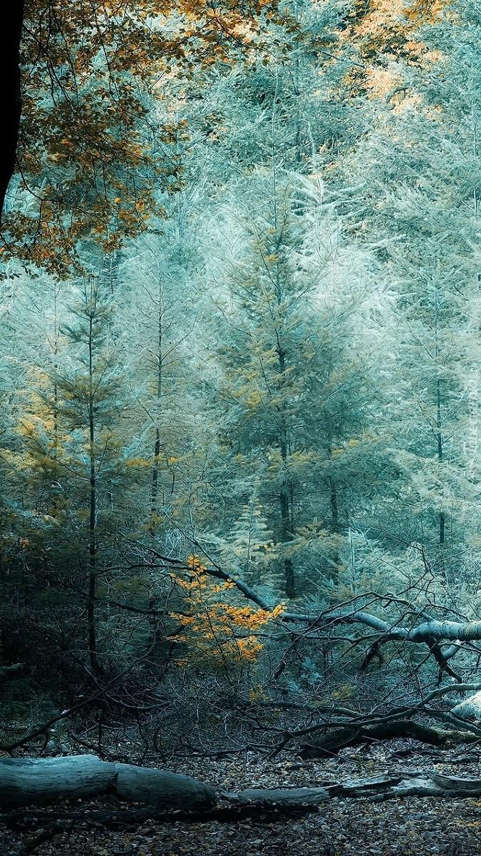 Suche konary pod drzewami w lesie
