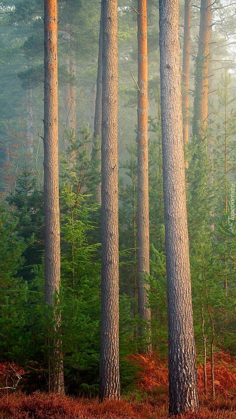 Suche paprocie pod drzewami w lesie