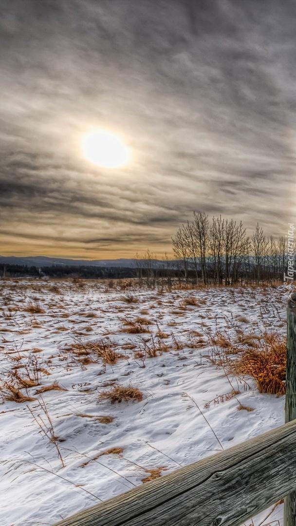 Suche trawy pod śniegiem