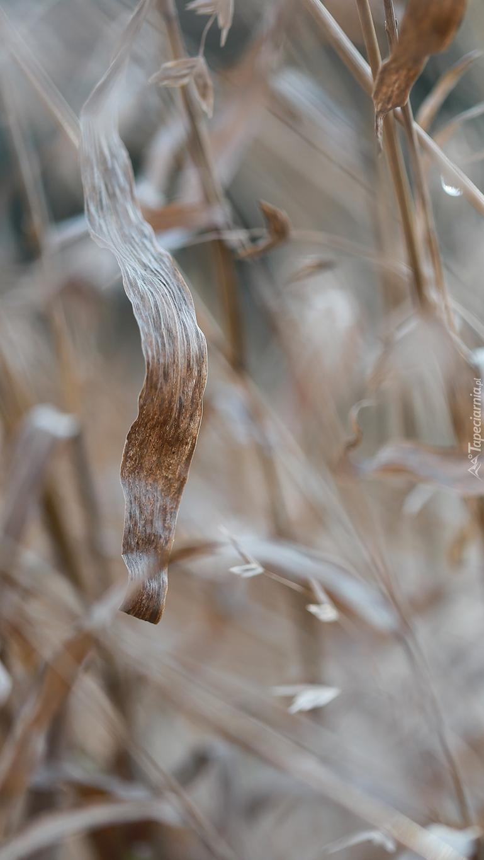 Suche trawy w zbliżeniu