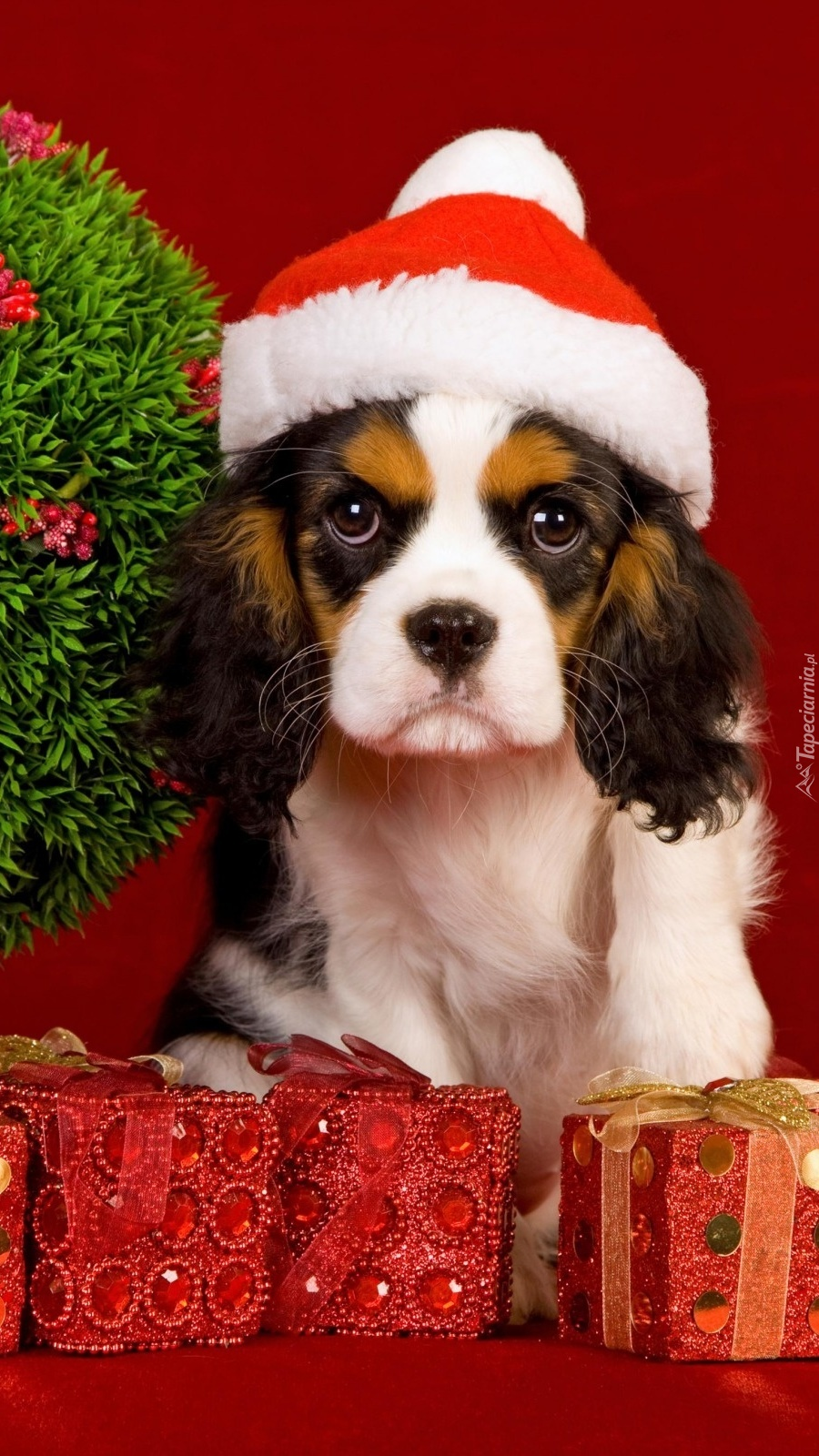 Świąteczny pies