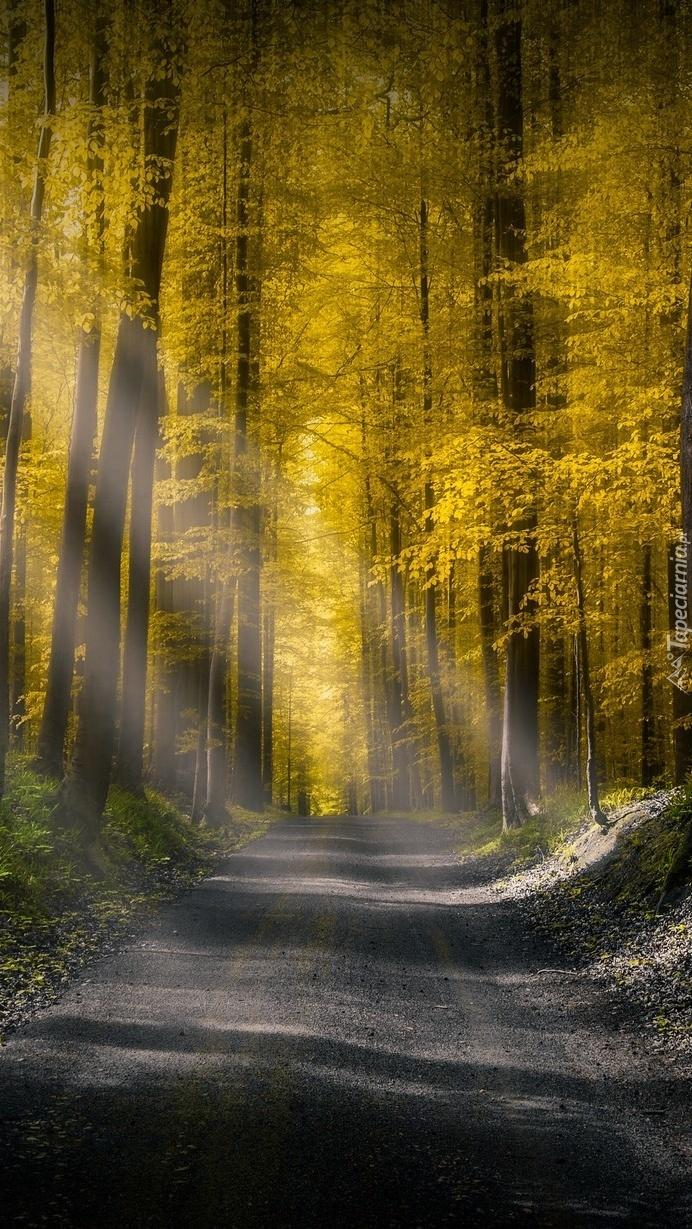 Światło na leśnej drodze