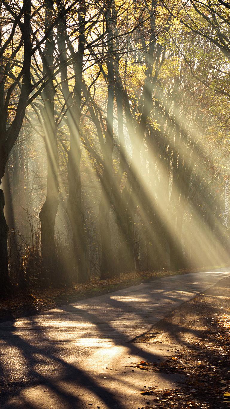 Światło padające na drogę