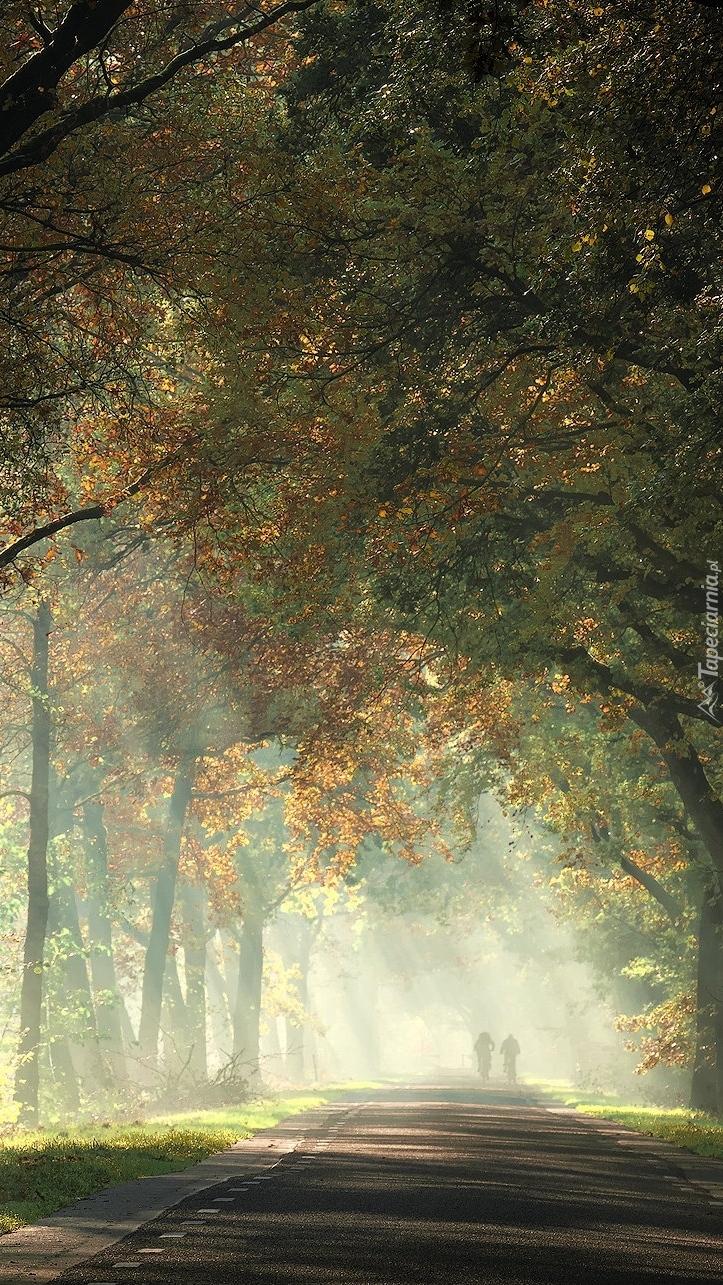Światło słoneczne padające spośród drzew na drogę