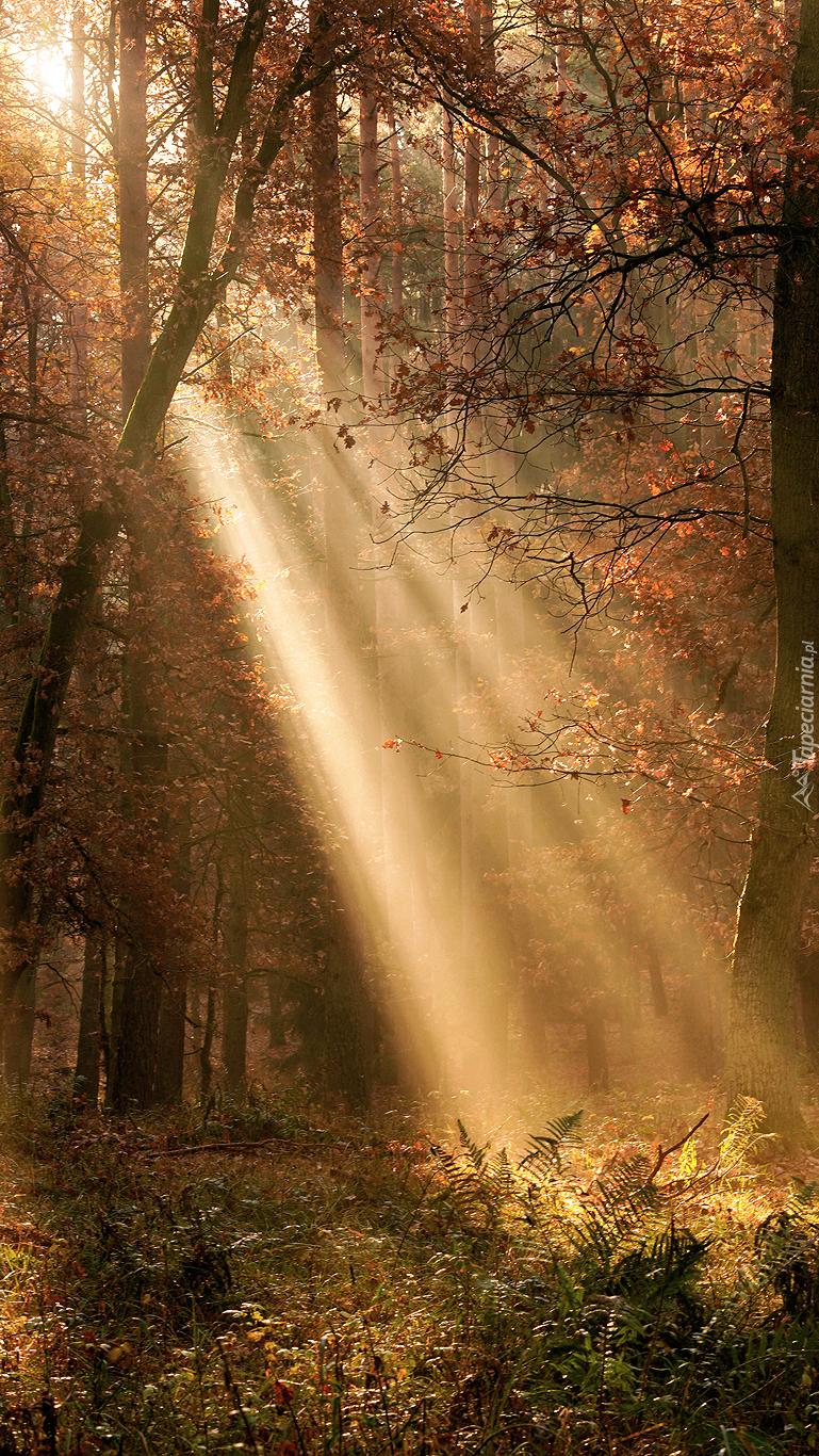 Światło wpadające do lasu