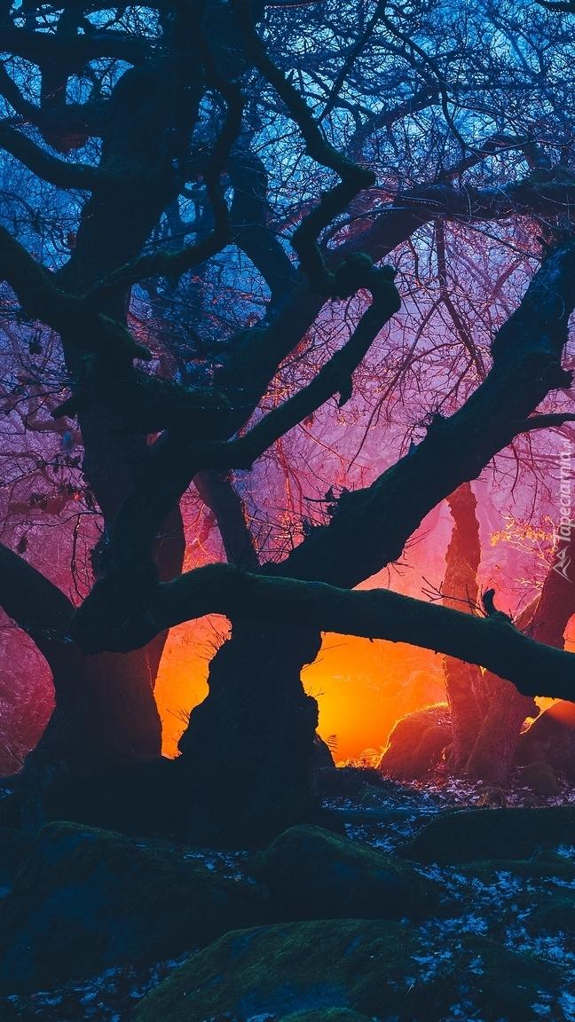 Światło wśród bezlistnych drzew