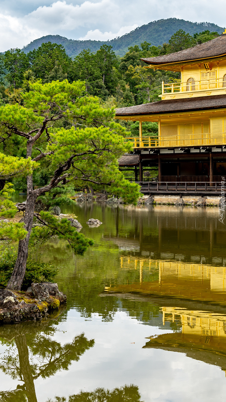 Świątynia Kinkaku-ji w Japonii