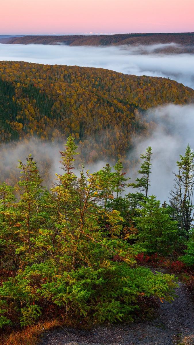 Świerki na wzgórzu we mgle