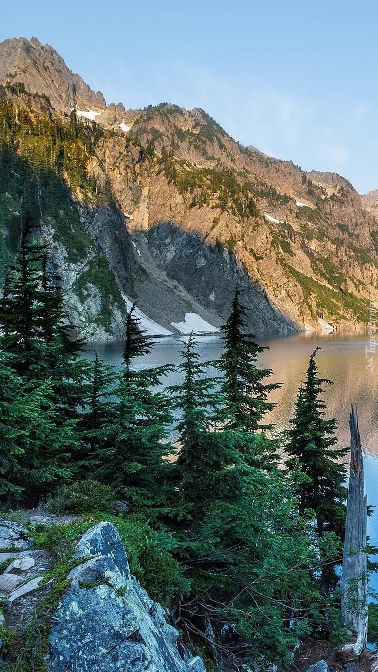 Świerki nad brzegiem jeziora Snow Lake