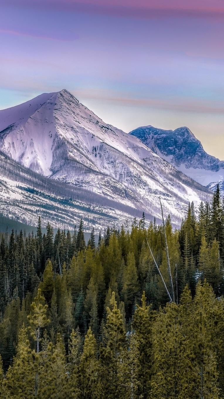 Świerkowy las w górach
