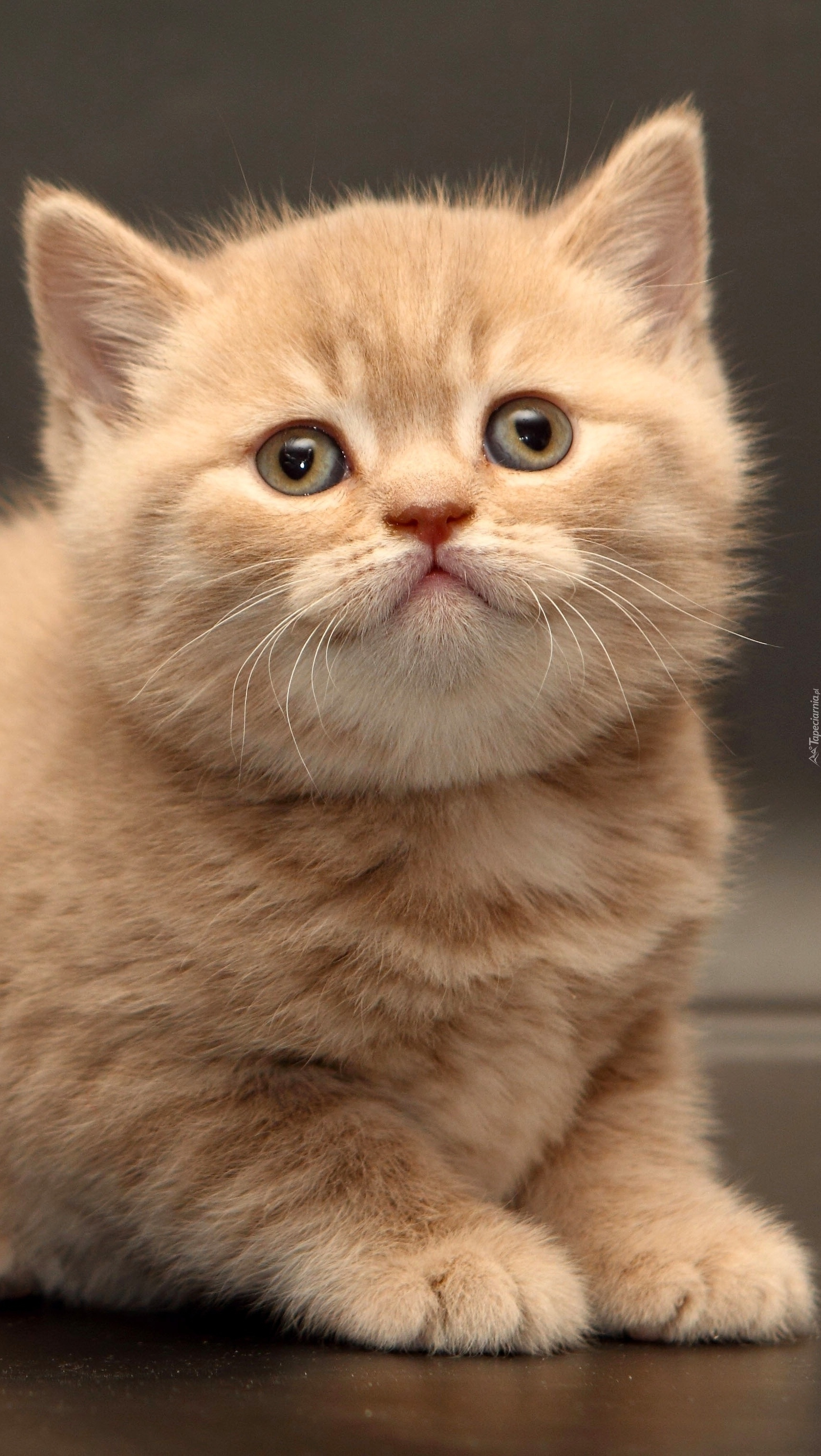 Sympatyczna kocia ruda mordka