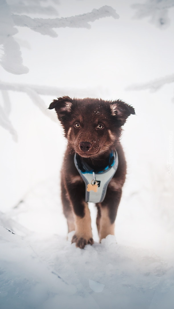 Szczeniak na śniegu