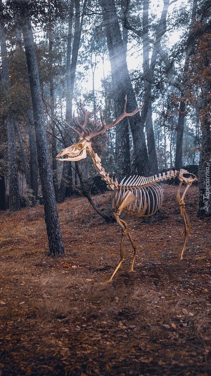 Szkielet jelenia