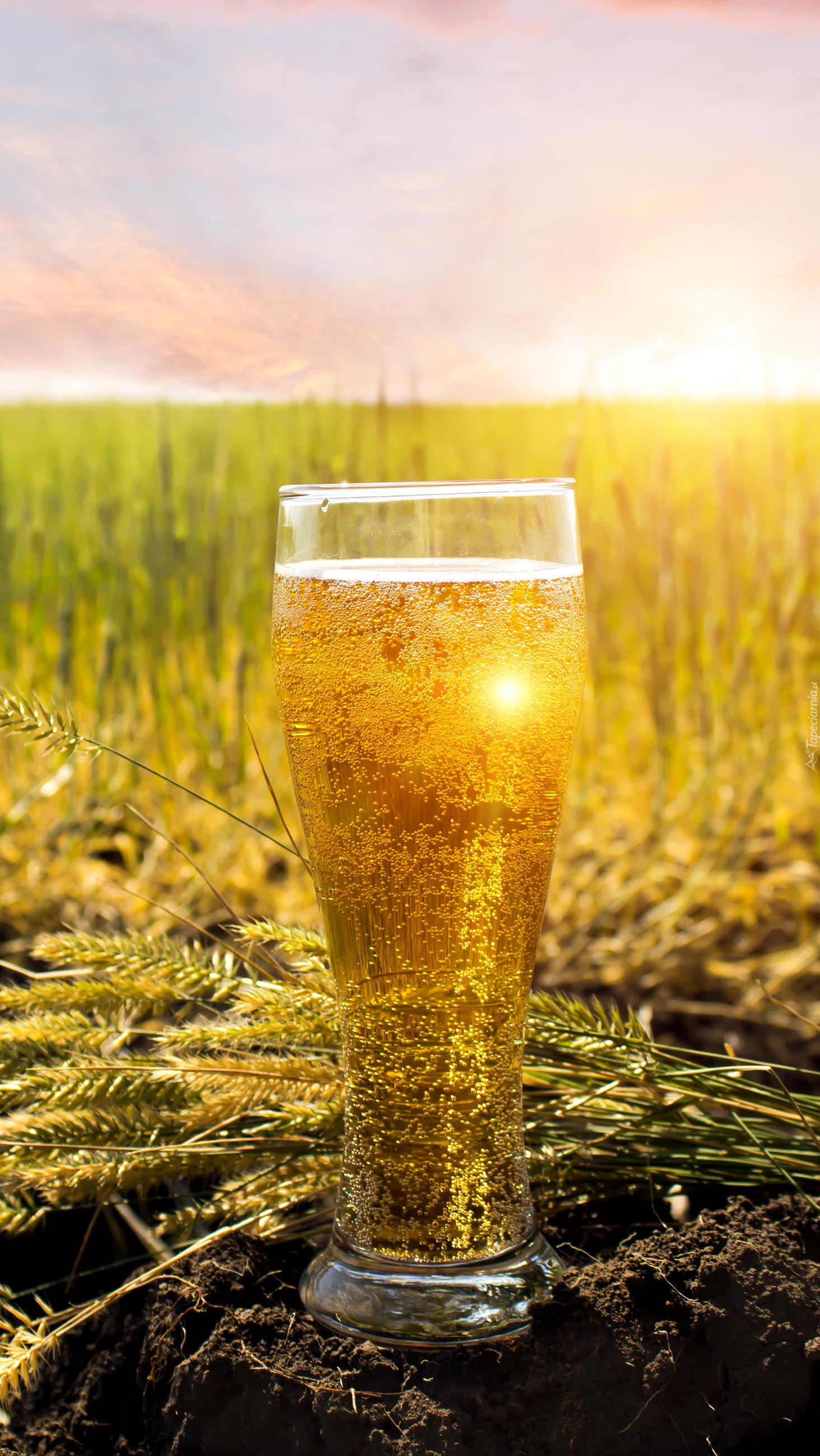 Szklanka piwa w zbożu
