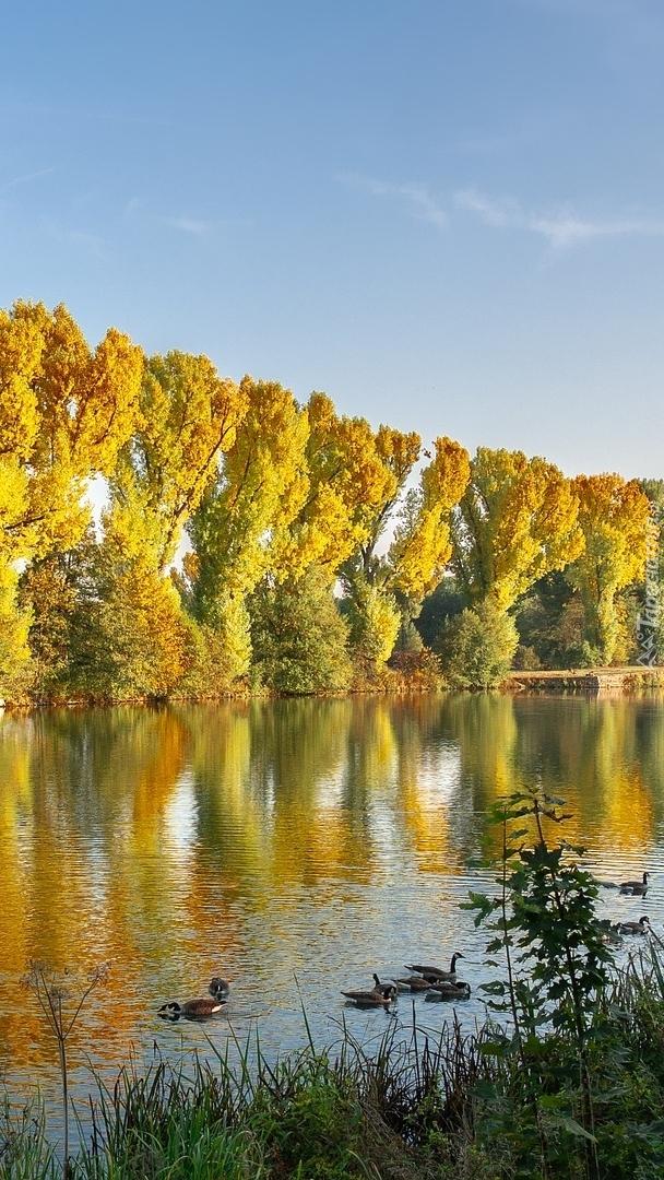 Szpaler drzew nad rzeką