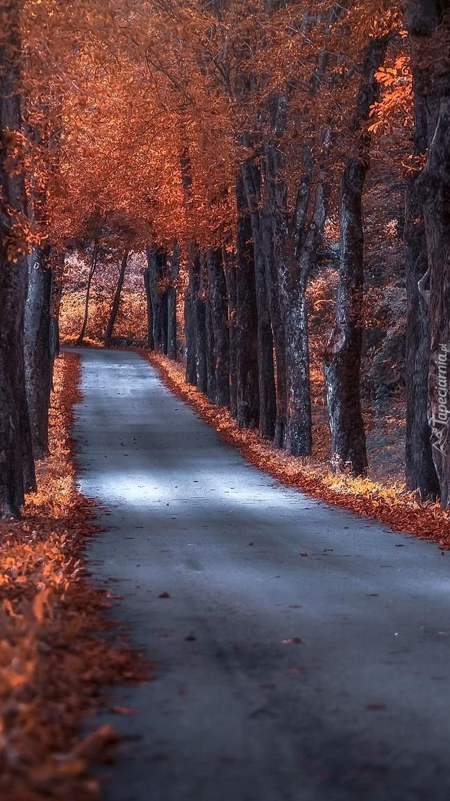 Szpalery jesiennych drzew przy drodze