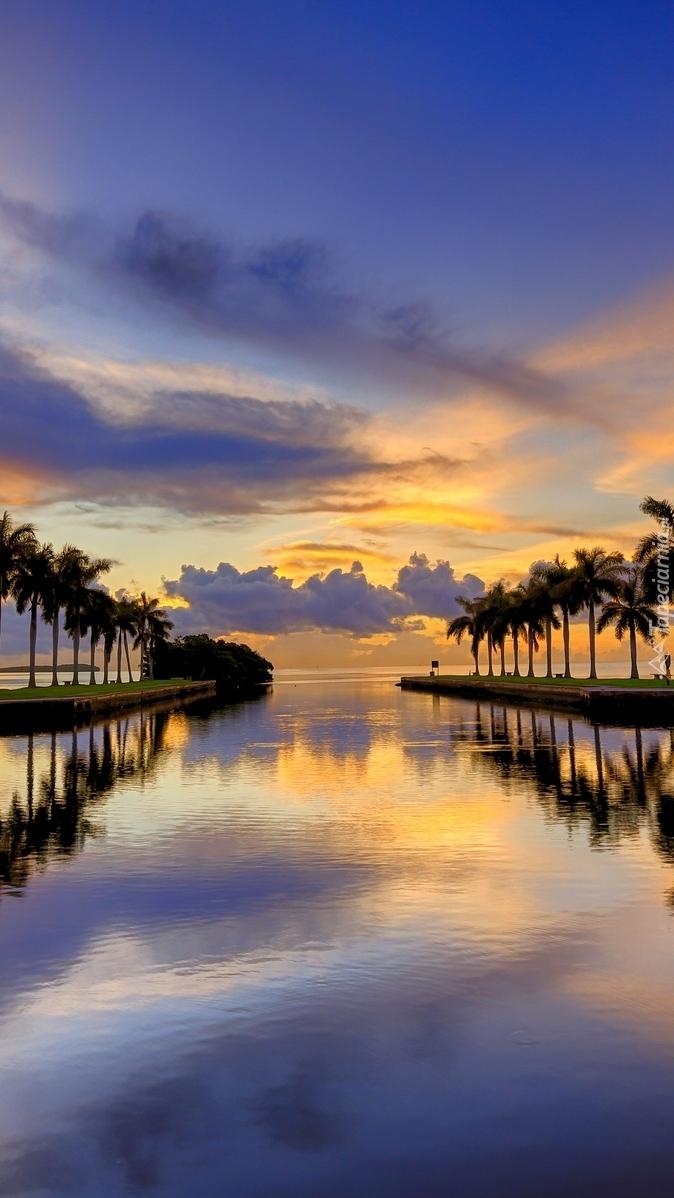 Szpalery palm nad morzem