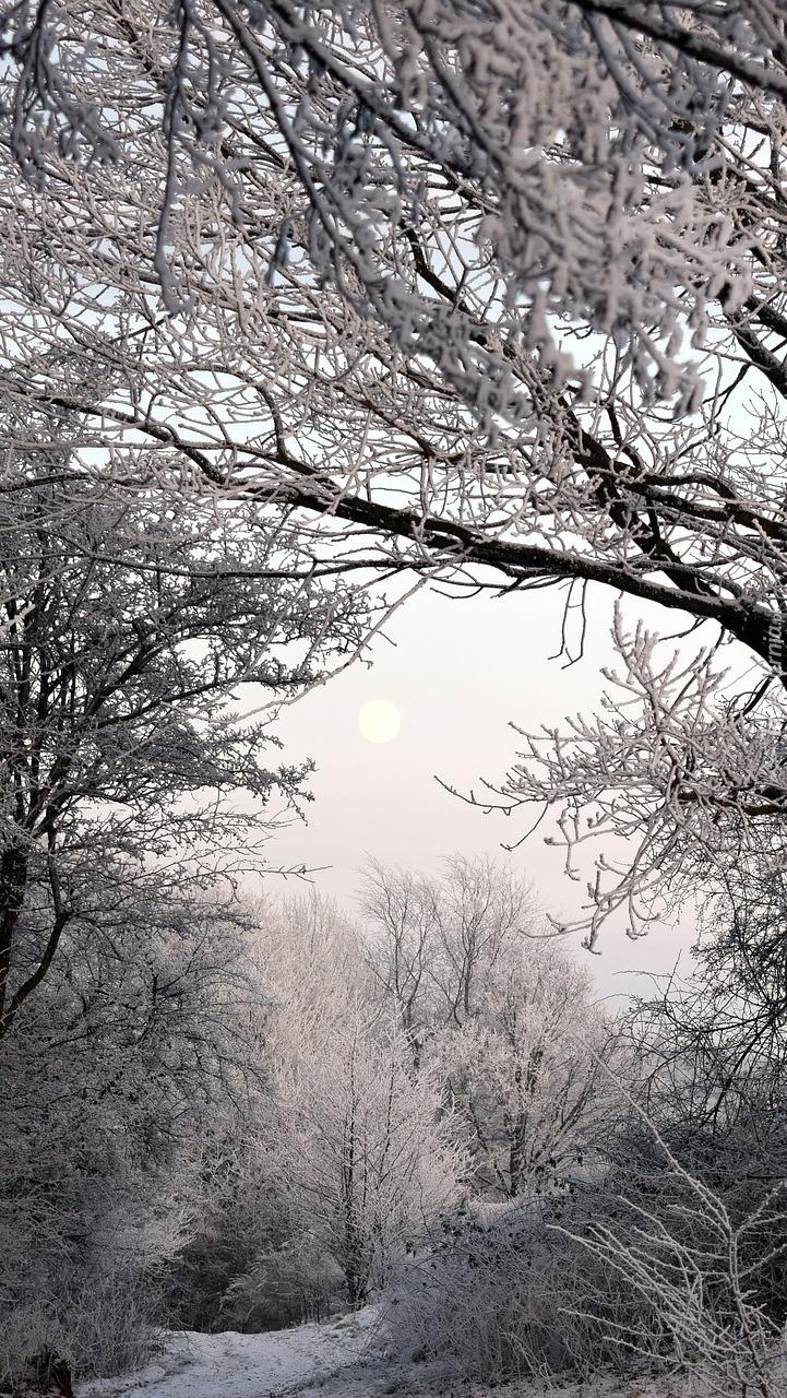 Szron na drzewach