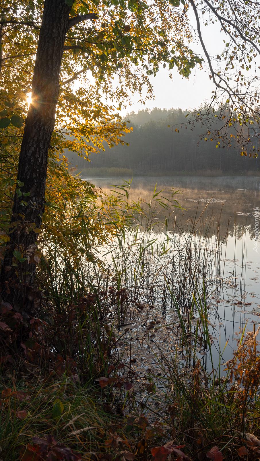 Szuwary pod drzewem na brzegu jeziora