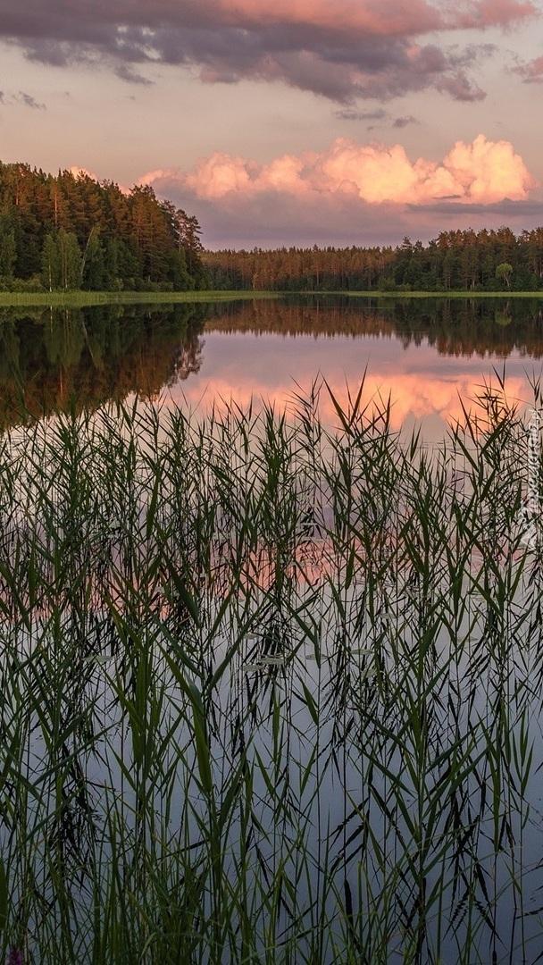 Szuwary w jeziorze