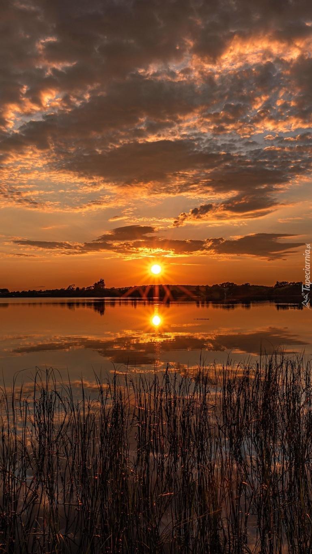 Szuwary w jeziorze o zachodzie słońca