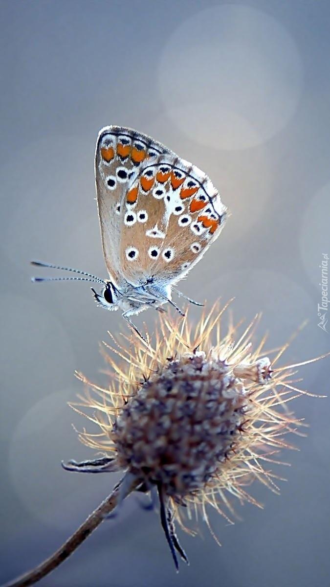 Tam gdzie motyl tam kwiaty