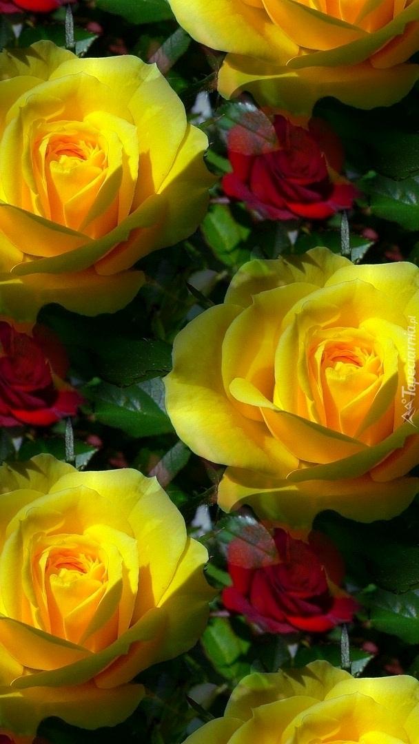 Tekstura w żółte róże
