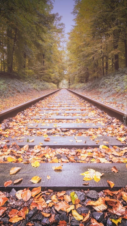Tory kolejowe  w lesie