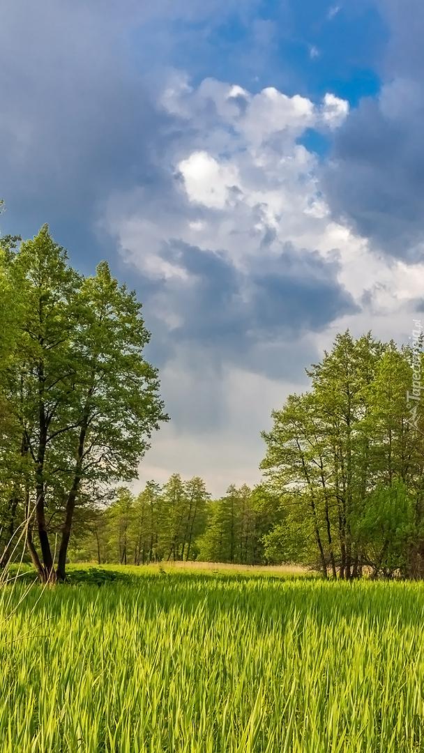 Trawa i drzewa w słonecznym blasku
