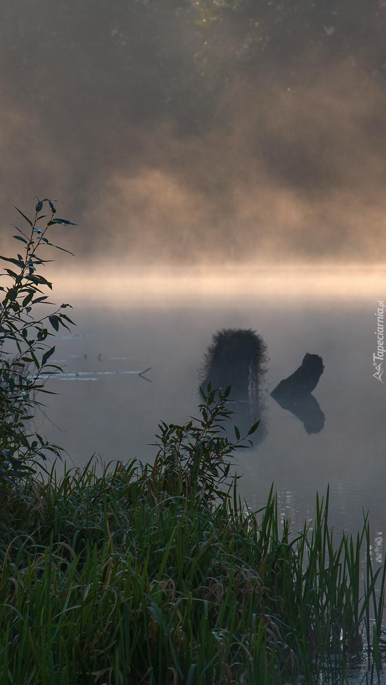Trawa na brzegu rzeki we mgle