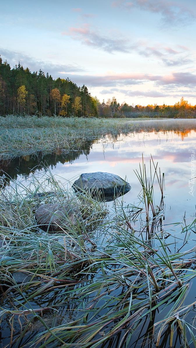 Trawa w jeziorze Ładoga