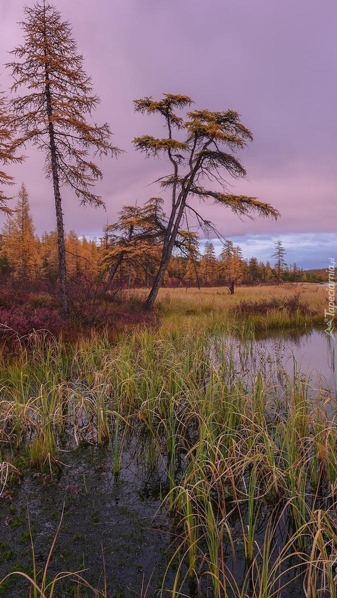 Trawy i drzewa nad jeziorem