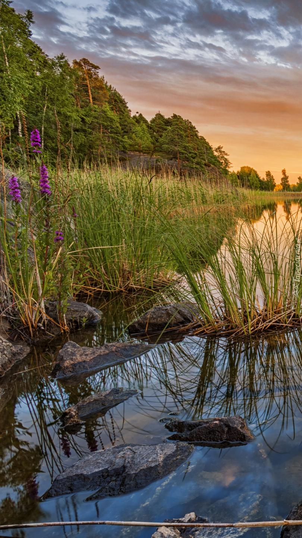 Trawy i kwiaty nad rzeką